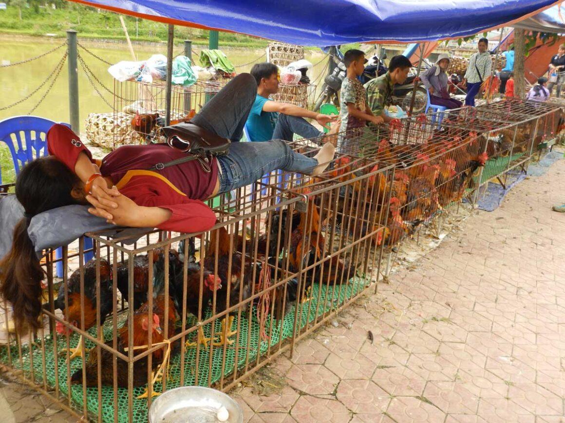 Riposino al mercato di Cat Ba, nord del Vietnam