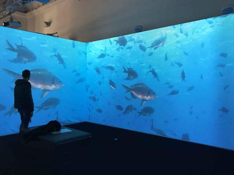 Mostra sul cambiamento climatico a Napoli: fondale marino