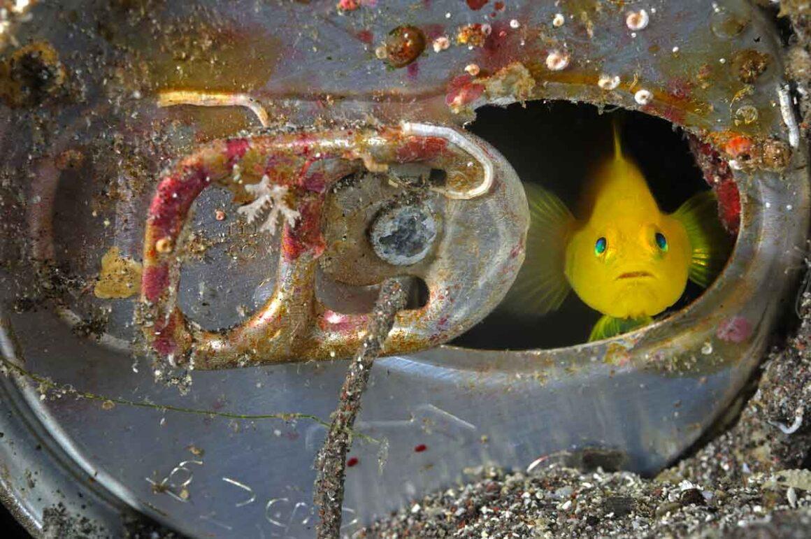 Pesce scruta il mondo dalla sua casa lattina. Foto di Brian J. Skerry per National Geographic
